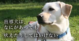 盲導犬オスカー.jpg